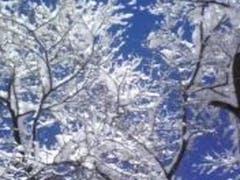湯沢、今年初の大雪